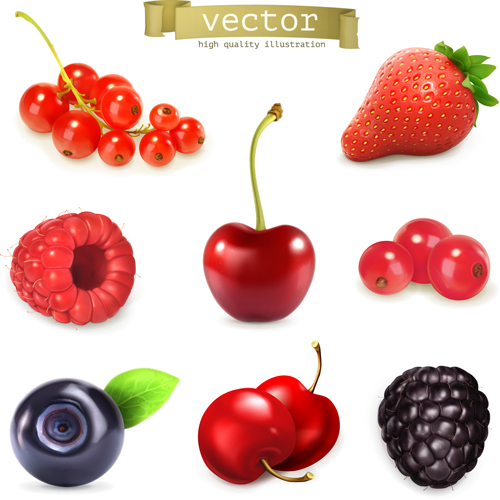 Various juicy fruits illustration vector