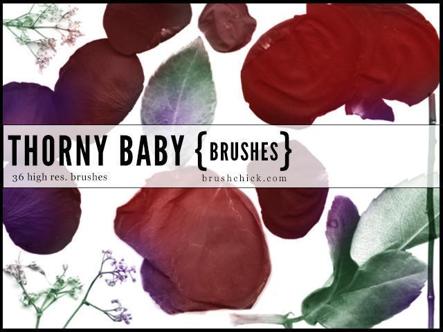 thorny baby rose brushes