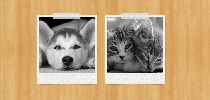 Pretty Polaroids (PSD)