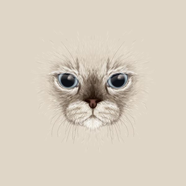 写真から本物そっくりな猫を描く方法