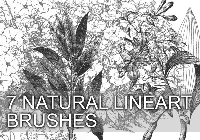 7 Natural Lineart Brushes