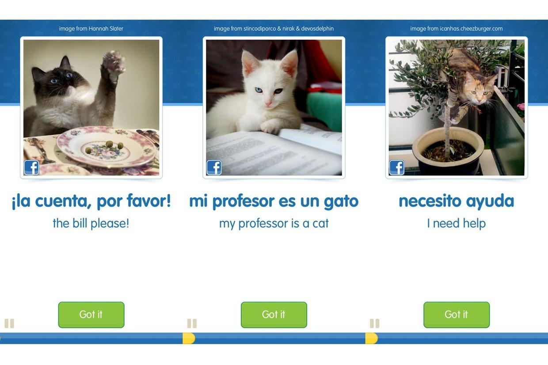 cat1_3.jpg