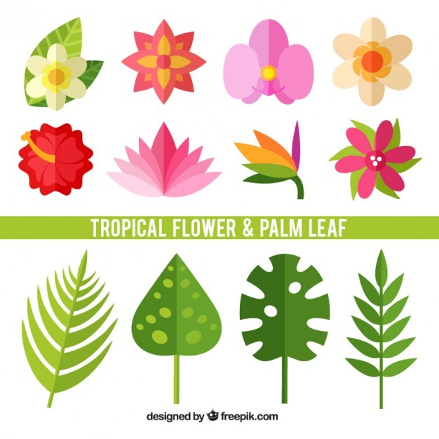 Set of tropical flowers and leaves in flat design