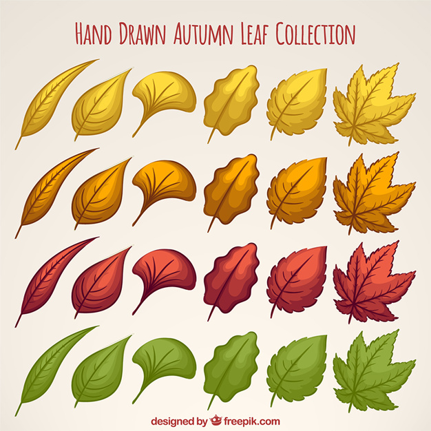 Collection of hand drawn leaves with different colors