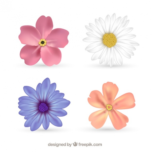 Four beautiful flowers