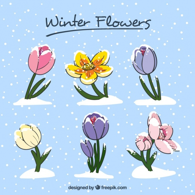 Beautiful hand-drawn winter flowers