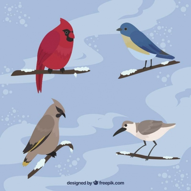 Four elegant birds on branches with snow