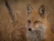 Firefoxユーザー必見!ブラウジング高速化の方法と業務効率化アドオンまとめ
