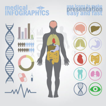 Vector Medical Infographics human body with internal organs
