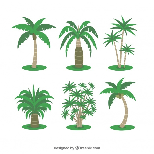 Several tropical palms