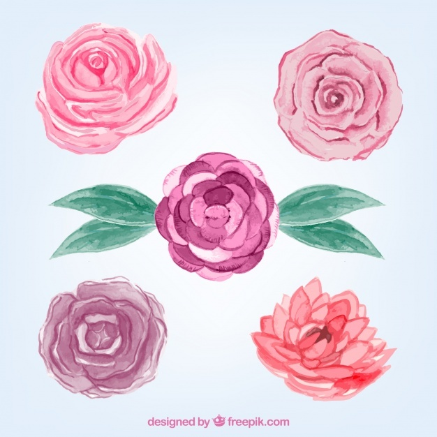 Selection of watercolor roses