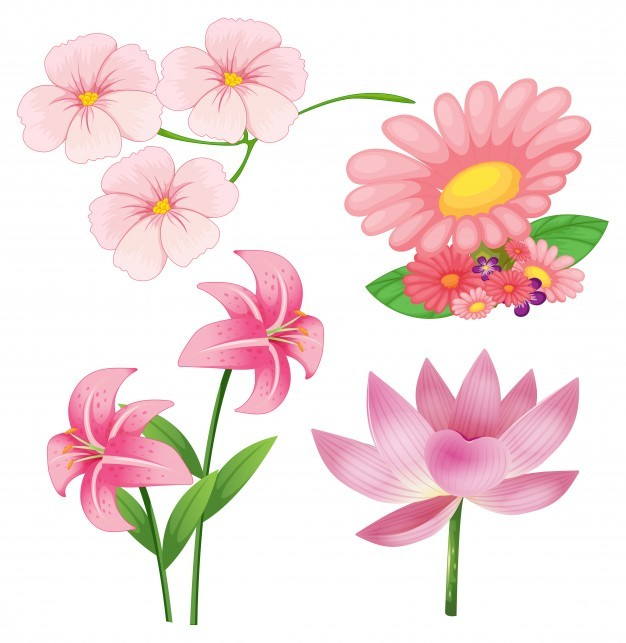 Set of different kind of pink flowers on white background