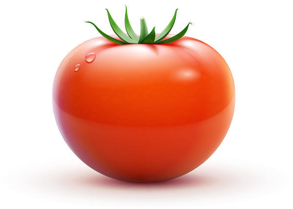 Free EPS file Fresh tomato illustration design vector 01 download