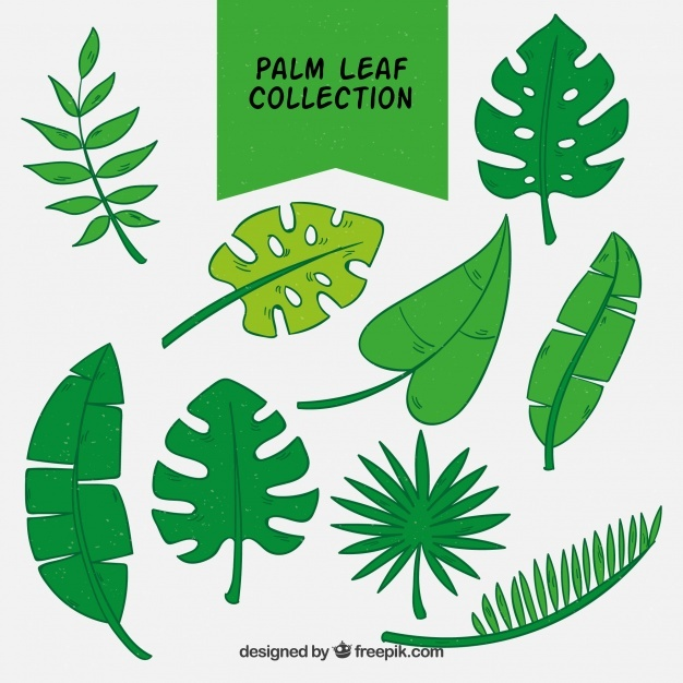 Collection of hand-drawn palm leaves