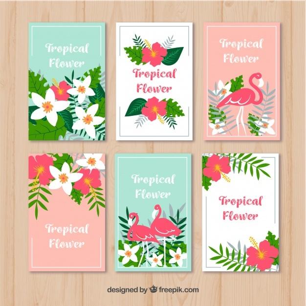 Tropical flamingo cards