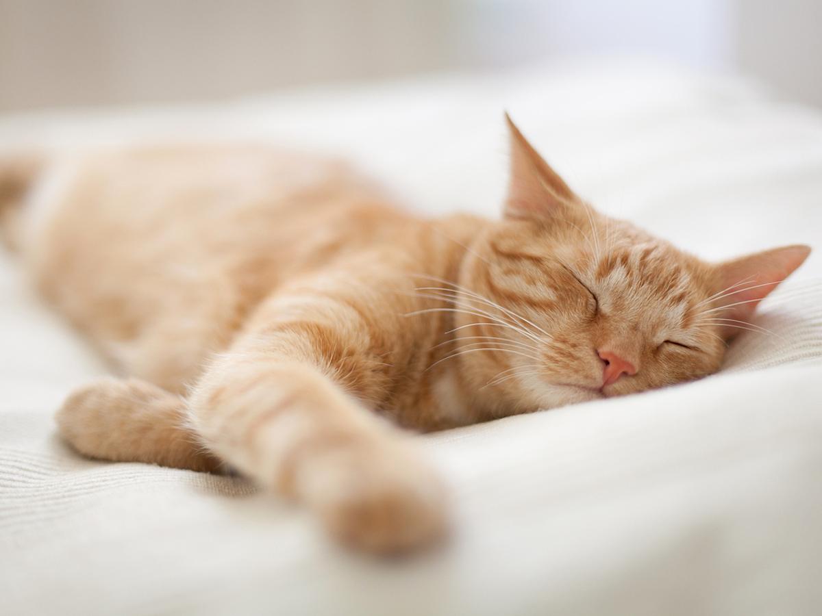 「Twitter・Instagramで「5,000万枚の猫画像」を分析してみた結果......!」の見出し画像