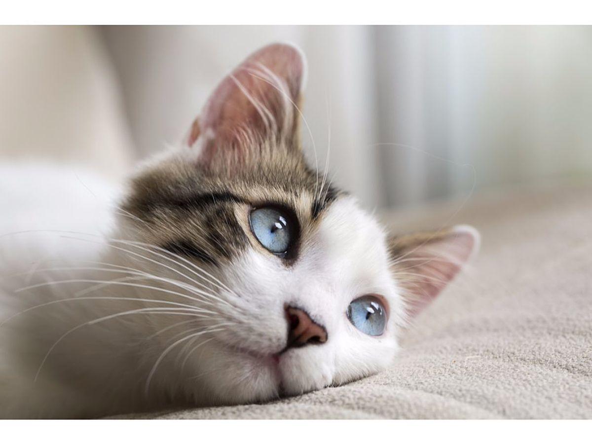 「猫でも分かるInstagram(インスタグラム)の登録と投稿方法など使い方」の見出し画像