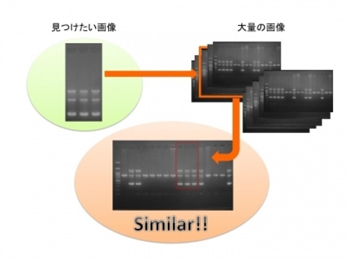 「東大発ベンチャーLPixel、世界初ライフサイエンス研究に特化した論文画像不正対策のための類似画像検出システムを開発」の見出し画像