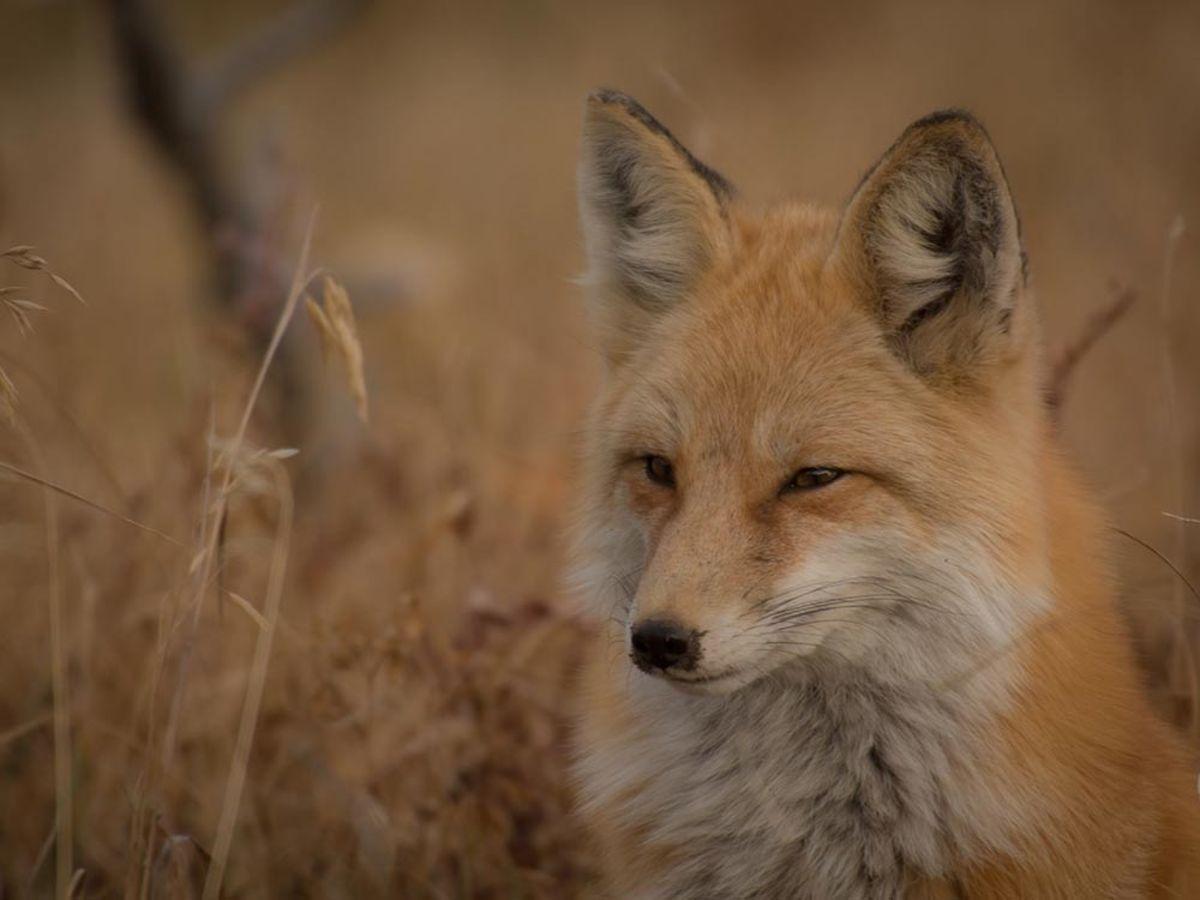 「Firefoxユーザー必見!ブラウジング高速化の方法と業務効率化アドオンまとめ」の見出し画像
