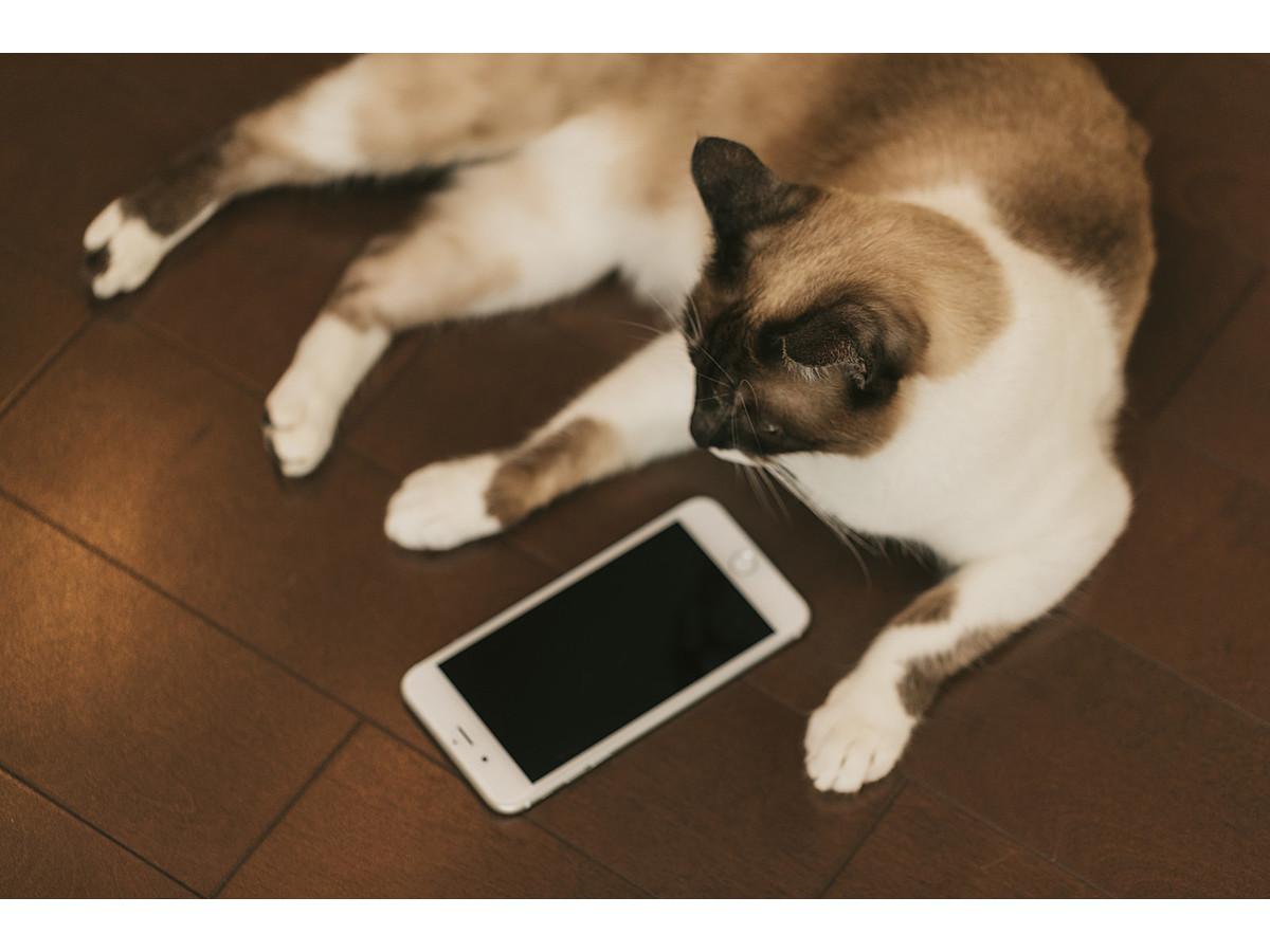 「ユーザーと密なコミュニケーションを取ろう!LINEビジネスコネクトとは&導入事例3選」の見出し画像