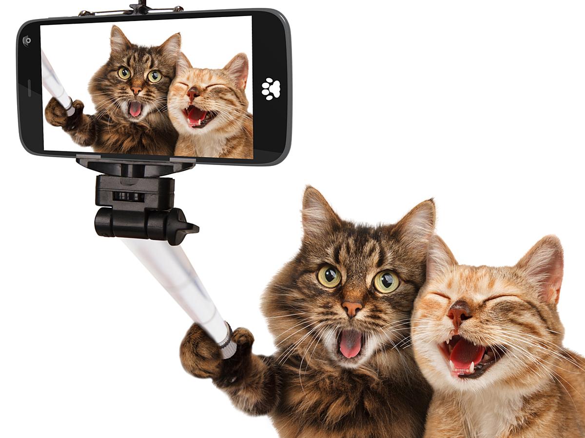 「看板犬や看板猫に数万人のファンがつく?動物を素材としたTwitter運用事例と3つのポイントを紹介」の見出し画像