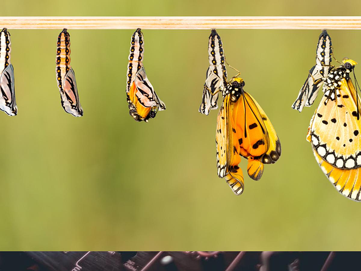 「2017年にWebデザイナーが認識しておくべき5つの変化」の見出し画像