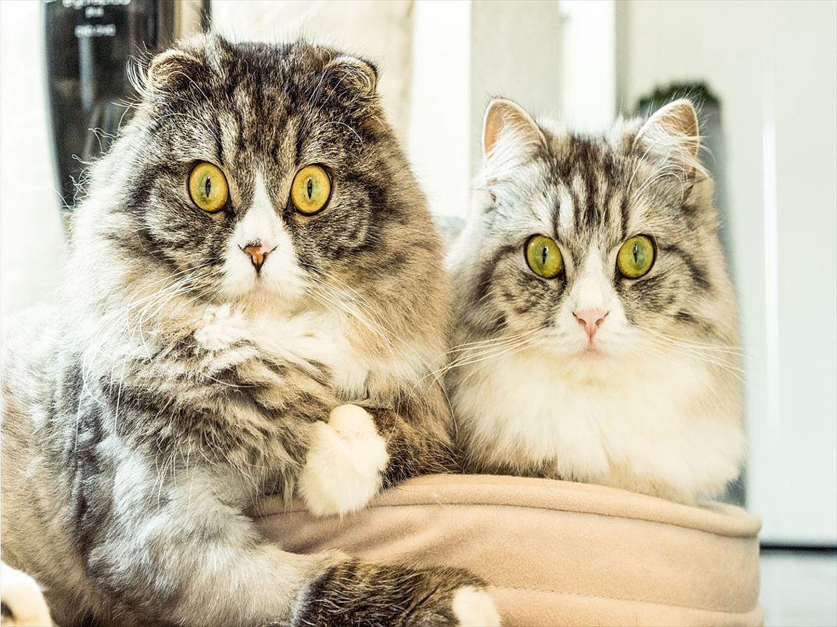 「動物画像が豊富なフリー画像サイト6選」の見出し画像