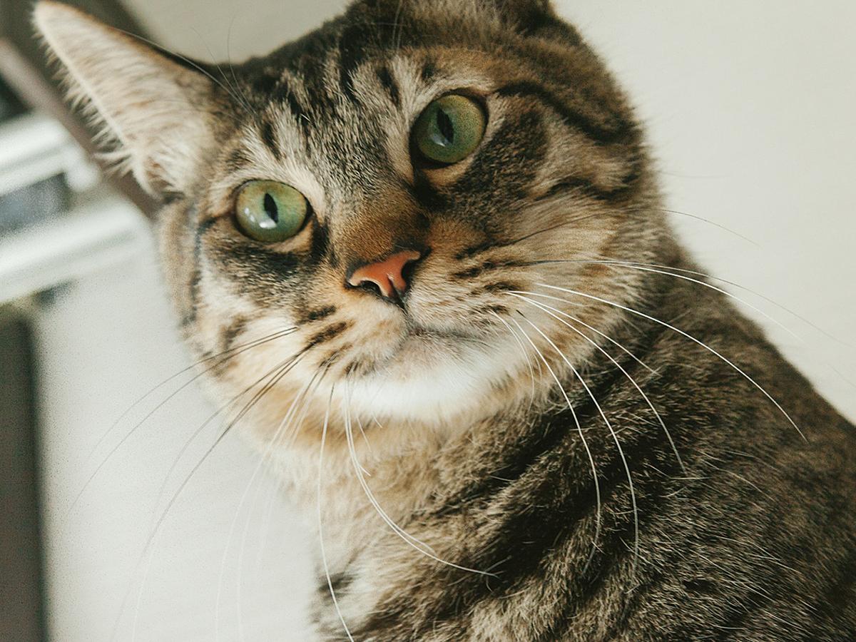 「猫も驚き!知って得するインスタグラム運用に便利なアプリ10選」の見出し画像